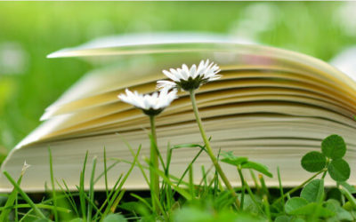 Der Weg zum eigenen Buch: Selfpublishing vs. Verlag